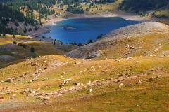 Ambiance pastorale
