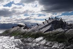 L'île aux oiseaux tulututu