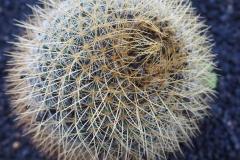 Zoom cactus