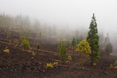 Balade de Samara - Teide