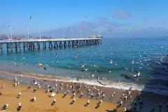La plage des mouettes