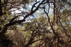 Dans la belle forêt de quenuals