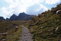 Au revoir les moutons