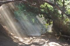 Sous-bois du Cerro Campanario