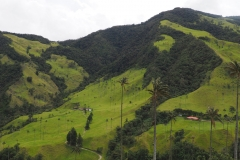 Dans la vallée de Cocora