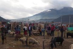 Le marché des animaux