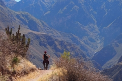 En descendant dans le  Canyon de Colca